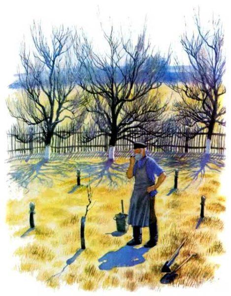 История одной яблоньки — Ушинский Константин