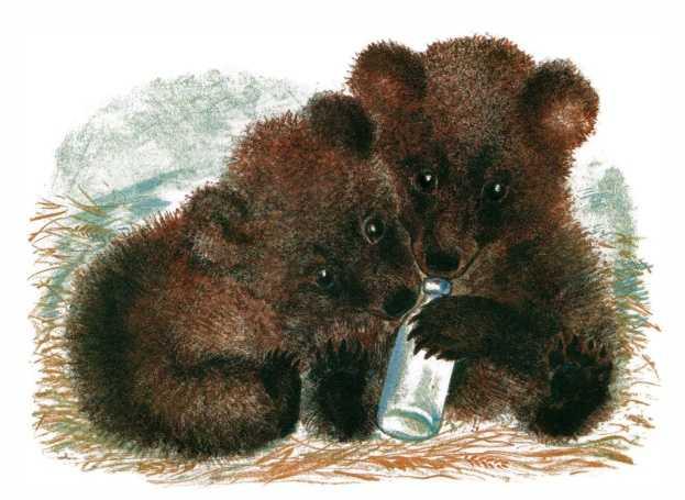 Медвежата — Чарушин Евгений