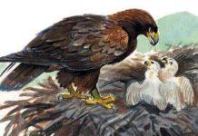 Орел — Толстой Лев