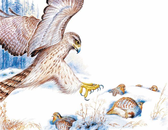 Птицы под снегом — Пришвин Михаил