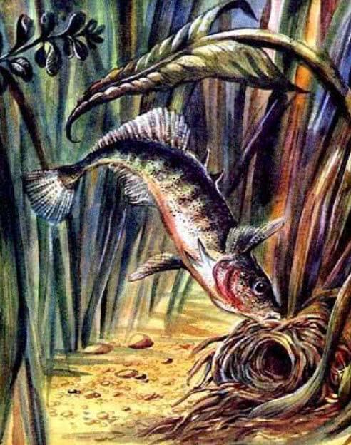 Рыбий дом — Бианки Виталий