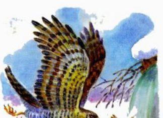 Мой хитрый сынишка: Сумасшедшая птица — Бианки В.В.