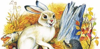 Заяц и еж — Ушинский Константин