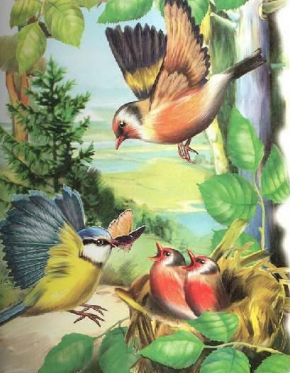 Синичкин календарь Виталий Бианки Июнь