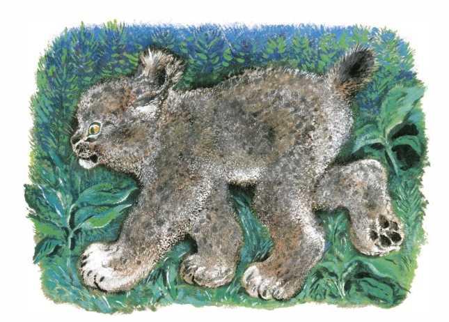 Лесной котенок — Чарушин Евгений