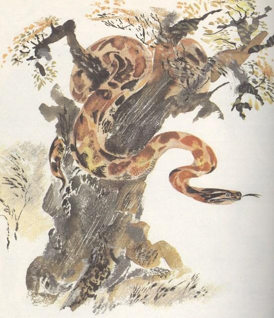 Моя первая зоология — Чарушин - адав