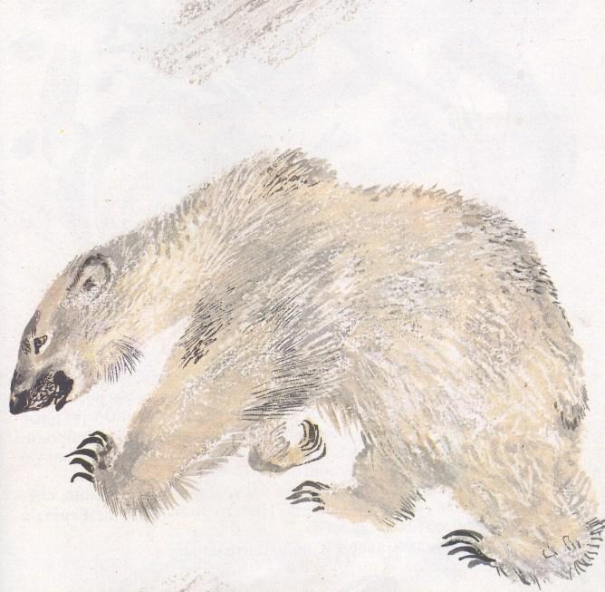 Моя первая зоология — Чарушин - белый медведь