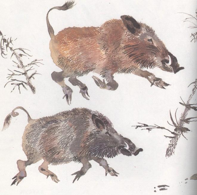 Моя первая зоология — Чарушин - кабан секач