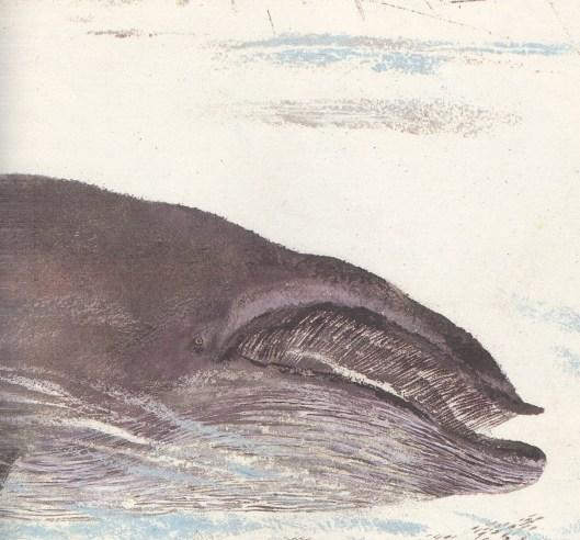 Моя первая зоология — Чарушин - кит