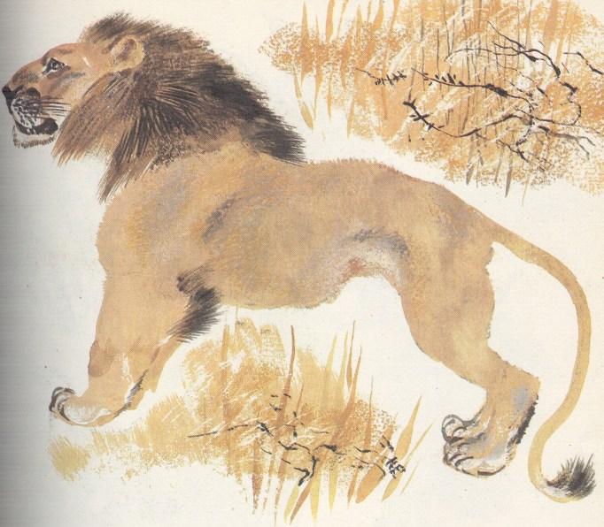 Моя первая зоология — Чарушин - лев
