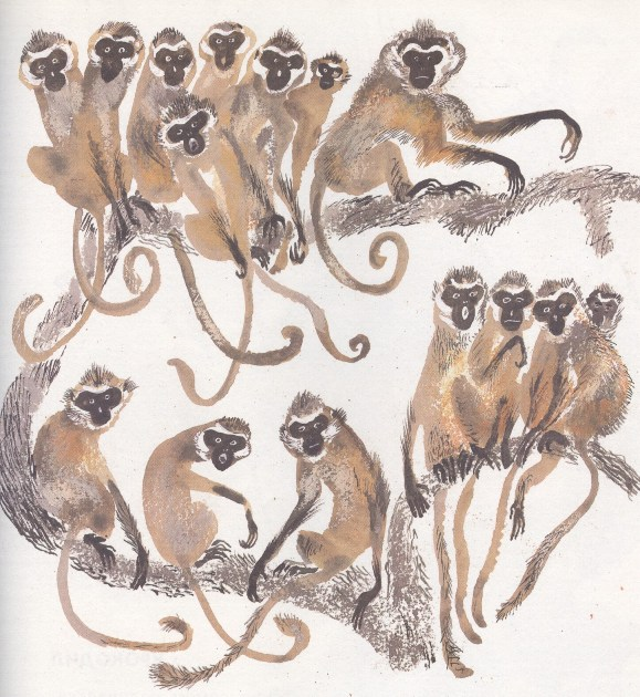 Моя первая зоология — Чарушин - мартышки