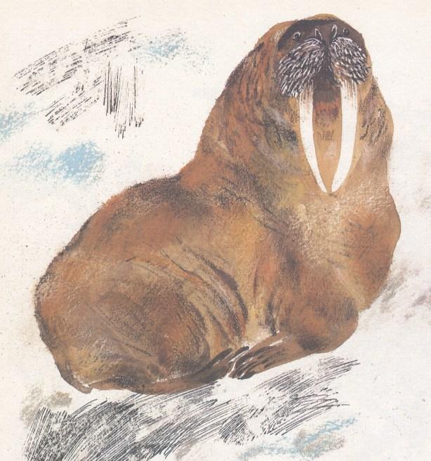 Моя первая зоология — Чарушин - морж