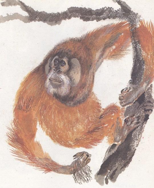 Моя первая зоология — Чарушин - орангутанг