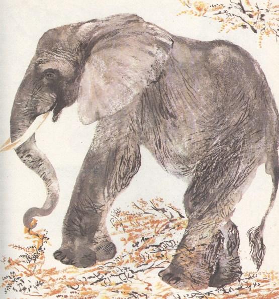 Моя первая зоология — Чарушин - слон
