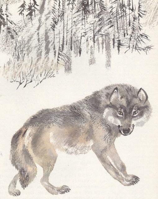 Моя первая зоология — Чарушин - волк