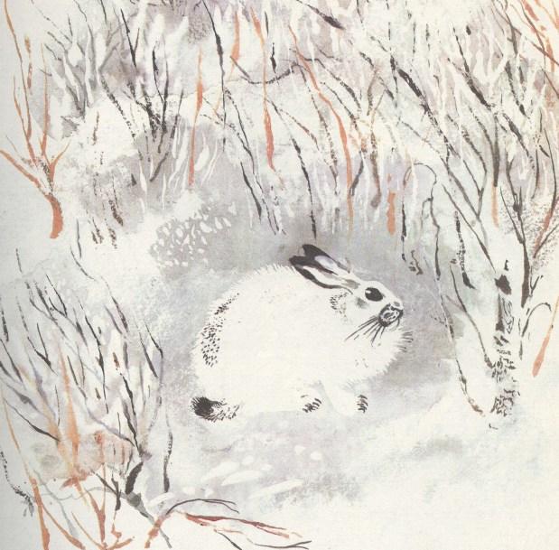 Моя первая зоология — Чарушин - заяц