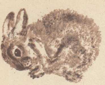 Васька, Бобка и крольчиха
