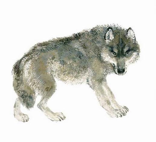 Волк — Чарушин Евгений