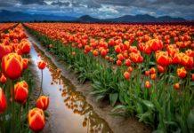 Цветы - Крылов