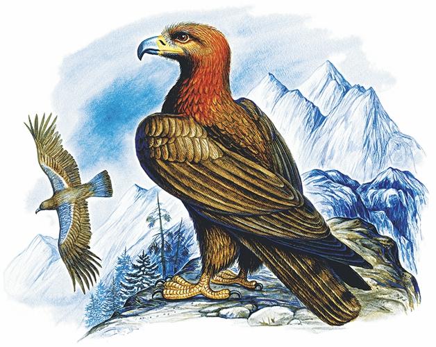 Орел — Ушинский Константин