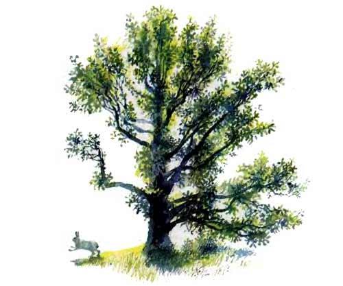 В лесу летом — Ушинский Константин