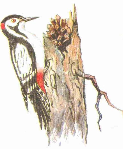Сухостойное дерево — Пришвин Михаил