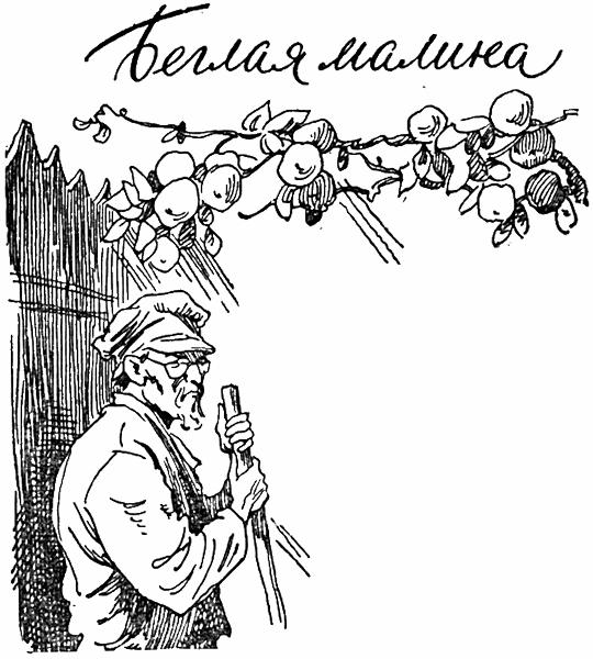 Беглая малина — Пермяк Евгений