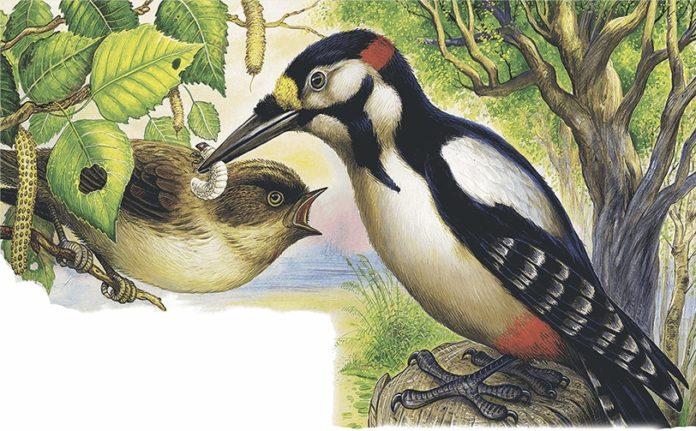 Дятел и малиновка — Бианки Виталий