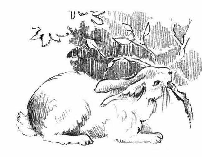 Как я хотел зайцу соли на хвост насыпать — Бианки Виталий